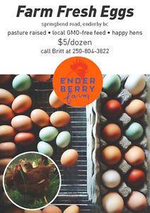 Farm Fresh Eggs from Enderby