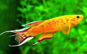 Will tank yoir unwanted aquarium stuff