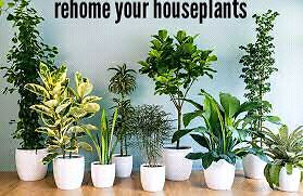Unwanted or sick plants?