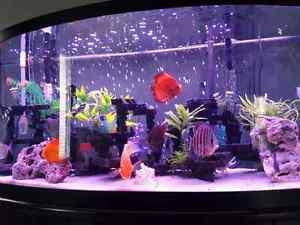 Beautiful 80 gallon Bowfront Fish Tank Aquarium