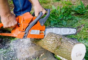 Tree Removal / Garbage Removal / Demolition /