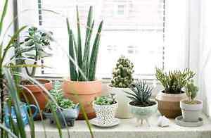 Wanted: Looking to buy indoor plants