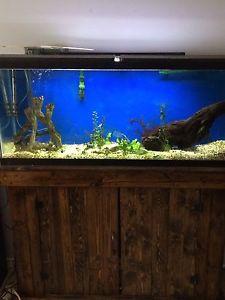 55 gal fish tank / aquarium $400