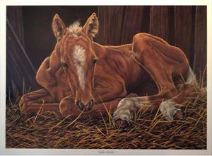 """Hello World"" - Gail Adams Limited Edition Print - Horse"