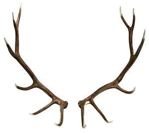 Wanted: *Looking for antlers and fur rugs to put in our