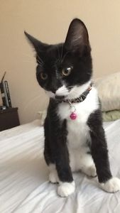 Free black an white cat to good home