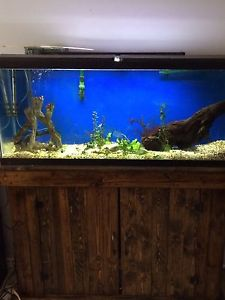 55 gallon fish tank/aquarium $350