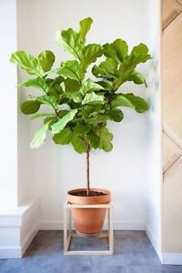 Wanted: Houseplants To a Good Home