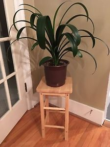 2 cute wooden stools - or plant stands!