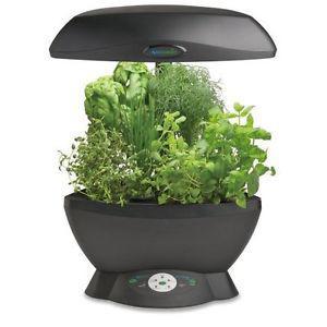 Grow Hydroponic Plants