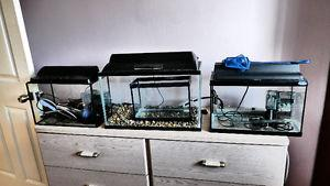 Aquarium and angel fish