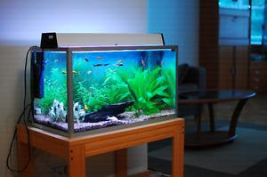 Looking for a free fish tank
