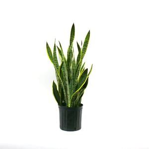 Wanted: Looking for house plant clippings
