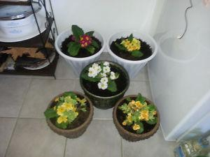 THE GIFT OF LIFE HEALTHY HOUSE PLANTS FOR SALE