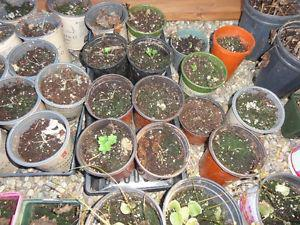 Looking for used plant pots