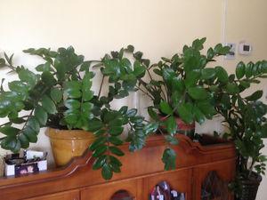 Real Indoor plants