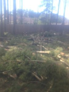 Free fire wood all pine 3 cords in coldbrook