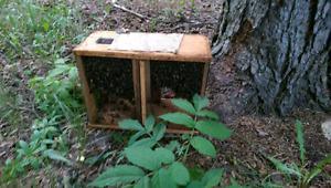 Manitoba Honey Bees