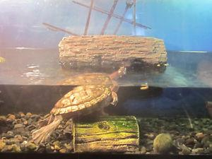 33 gallon aquarium with stand