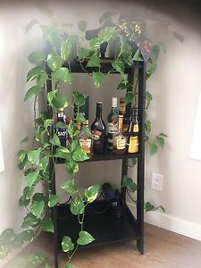 Bar/Book Shelf