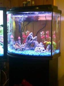 26 gallon bow front tank with stand