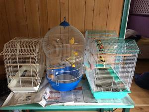 2 male parakeets for sale