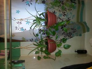 """BEAUTIFUL HEALTHY HOUSE PLANTS FOR SALE """"A GIFT OF LIFE"""""""