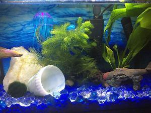 Wanted: 10g fish tank