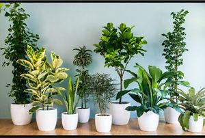 Wanted: Looking for house plants