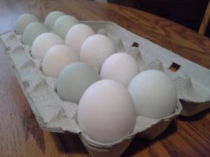 Duck eggs - Salmon Arm