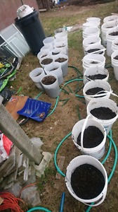 5 gallon buckets filled with organic soil!