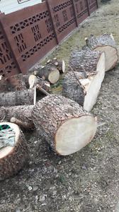Free spruce firewood