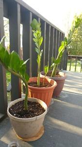 Indoor House Plants!