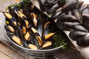 Wanted: Buy 300lb mussels per week.
