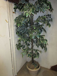 Wanted: LOOKING FOR AN ARTIFICIAL INDOOR TREE 6-7FT TALL