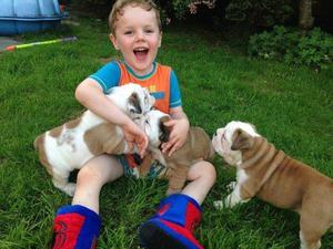 Gorgeous English Bulldog puppies available FOR SALE ADOPTION