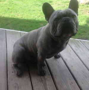 Cute French Bulldog puppies FOR SALE ADOPTION