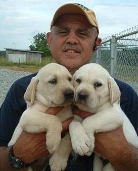 Labrador Retriever Puppies For Adoption FOR SALE ADOPTION