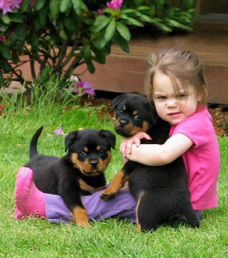 Rottweiler Puppies For Adoption FOR SALE ADOPTION