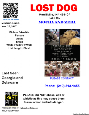 Lost dogs Mocha and Zera