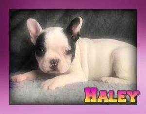 Haley Female Frenchton