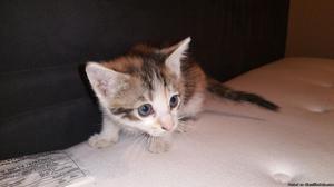 6 week old kittens