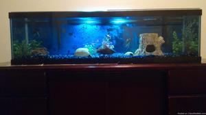 44 gallon complete fresh fish water tank