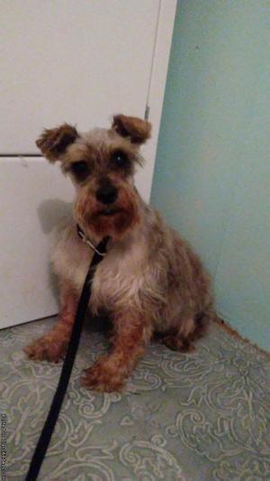 Rescue pure breed small dog s