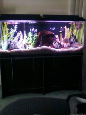 Complete 55 gal Aquarium