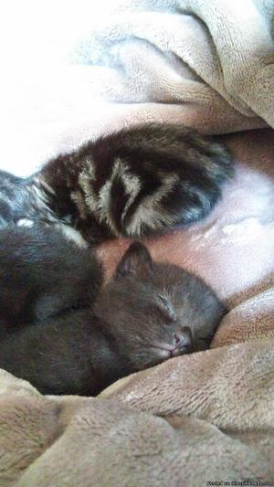 Adorable very loving 10 week old kittens