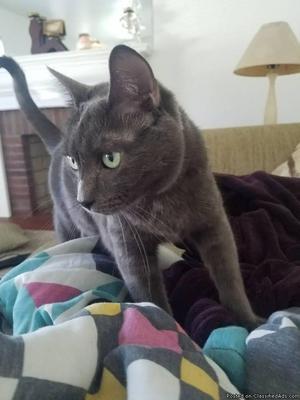3YR OLD CAT