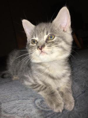 ADORABLE FREE KITTENS TO GOOD HOMES