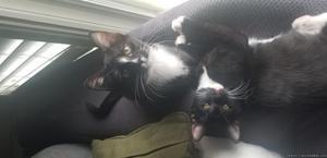 2 female kittens needing a forever loving home
