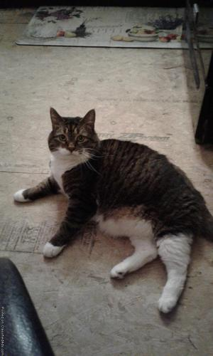 FREE INDOOR 6YR OLD MALE CAT
